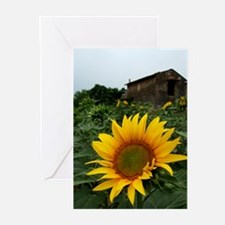 Farmhouse Sunflower Greeting Cards (Pk of 20)