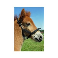 """Russ Foal 1"" Rectangle Magnet"
