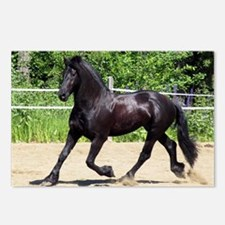 """""""Friesian 4"""" Postcards (Package of 8)"""