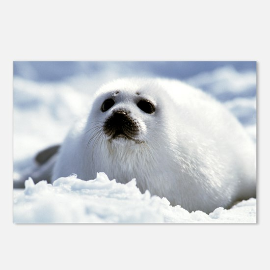 Harp Seal Postcards (Package of 8)