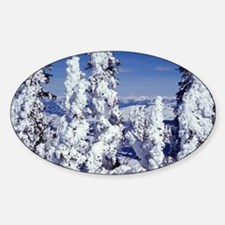 Snow Covered Trees Decal