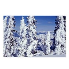 Snow Covered Trees Postcards (Package of 8)