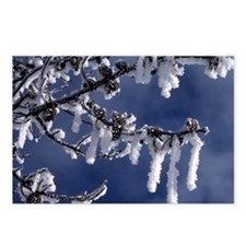 Winter Snow Crystals Postcards (Package of 8)