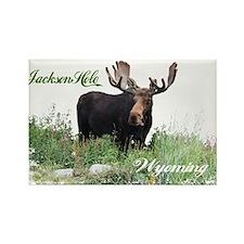 Jackson Hole WY Moose Rectangle Magnet