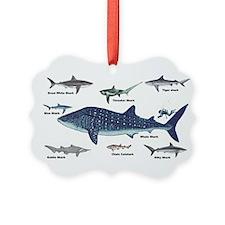 Shark Types Ornament