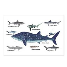 Shark Types Postcards (Package of 8)