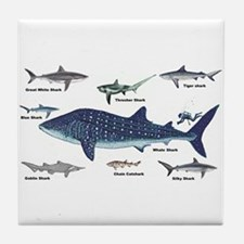 Shark Types Tile Coaster