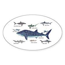 Shark Types Decal