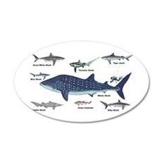 Shark Types Wall Decal