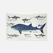 Shark Types Rectangle Magnet (10 pack)