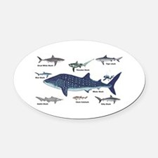 Shark Types Oval Car Magnet