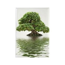 ficus water reflection Rectangle Magnet