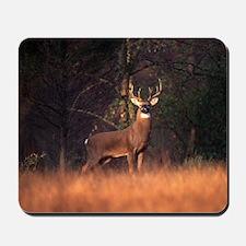 Whitetail Deer Mousepad