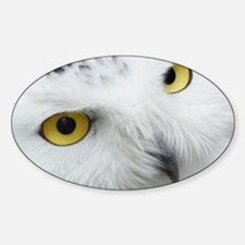 white snowy owl face closeup Decal