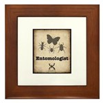 Entomologist Framed Tile