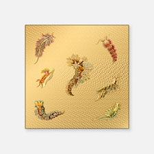"Beautiful Sea Creatures Square Sticker 3"" x 3"""