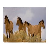 Buckskin horse Blankets