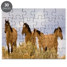 Buckskin Horses Puzzle