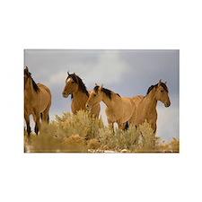 Buckskin Horses Rectangle Magnet