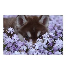 Flower Husky Postcards (Package of 8)