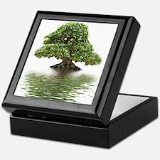 ficus water reflection Keepsake Box