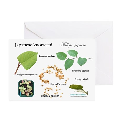 Japanese Knotweed Greeting Cards (Pk of 10)