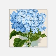"Blue hydrangea flowers Square Sticker 3"" x 3"""