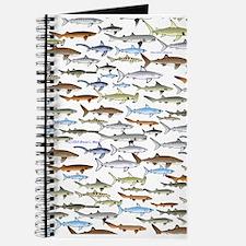 School of Sharks 2 Journal