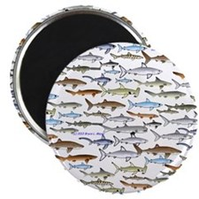 School of Sharks 2 Magnet