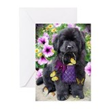 Dog Greeting Cards (10 Pack)