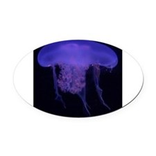 Jelly Fish Blue Oval Car Magnet