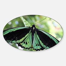 Green Butterfly Sticker (Oval)