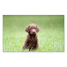 Chesapeake Bay Retriever Puppy Decal