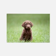 Chesapeake Bay Retriever Puppy Rectangle Magnet