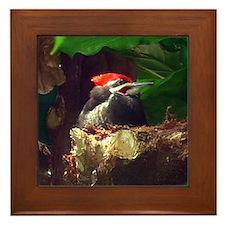 pileated woodpecker Framed Tile