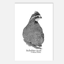 Bobwhite Quail Postcards (Package of 8)