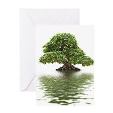 Ficus bonsai with water reflection Greeting Cards