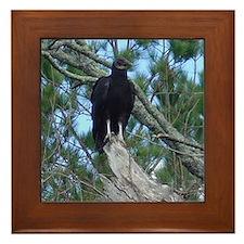 black vulture Framed Tile
