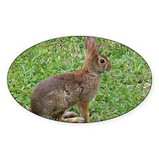 Alerted Rabbit Decal
