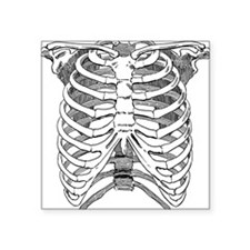"""ribcage_tr.png Square Sticker 3"""" x 3"""""""