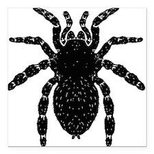 """tarantula-bl_bl.png Square Car Magnet 3"""" x 3"""""""