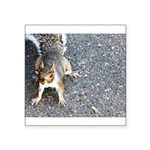 squirrel_nc.jpg Square Sticker 3