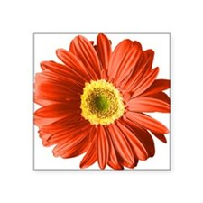 "pop-daisy_rd.png Square Sticker 3"" x 3"""