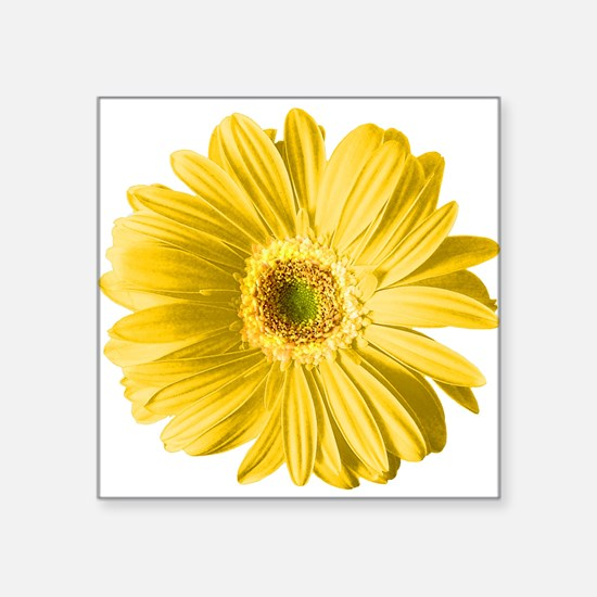 """pop-daisy_yl.png Square Sticker 3"""" x 3"""""""