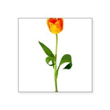 "tulip_new2.png Square Sticker 3"" x 3"""