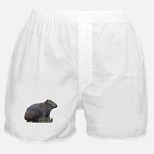 Sitting Wombat Boxer Shorts