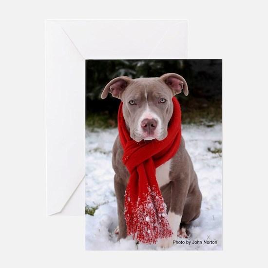 Winter Pit Bull Greeting Card