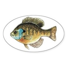 Bluegill Bream Fishing Oval Decal