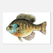 Bluegill Bream Fishing Postcards (Package of 8)