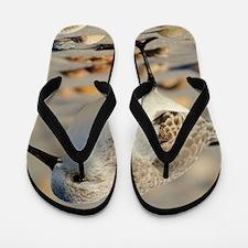 Sand Piper and Seashells Flip Flops